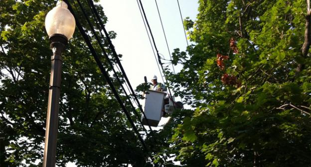 A contractor with Pepco trims back branches that are encroaching on power lines in Petworth.