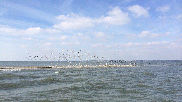 Virginia's barrier islands shelter more than 250 species of raptors, songbirds and shorebirds.