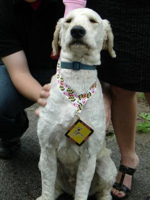 Dozer, a goldendoodle, was awarded a medal for his participation in the Maryland Half Marathon.